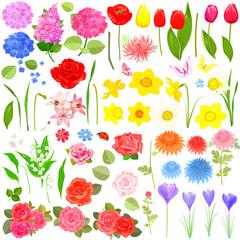 lovely flower set for your design