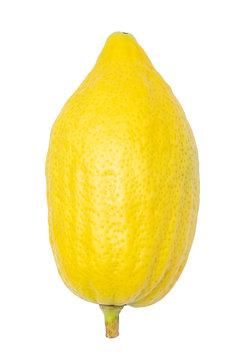 Yellow etrog for Sukkot