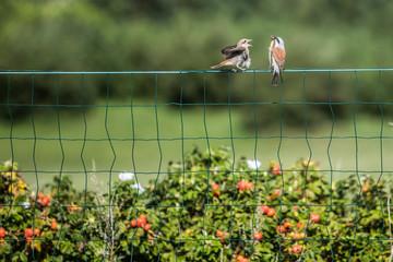birds eating lizard