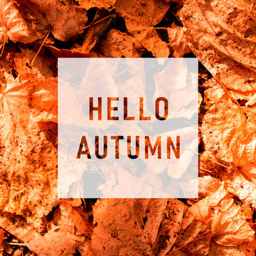 Hello autumn, greeting text on colorful fall leaves background. Word Autumn with colorful leaves. Creative nature concept. Minimal flat lay.
