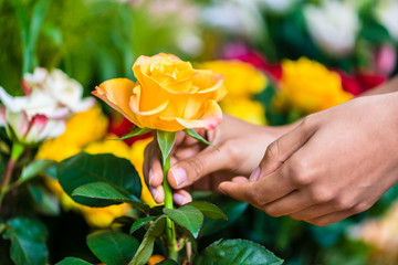 Side view close-up of the hand of a romantic man picking up a beautiful yellow rose while buying flowers in a modern flower shop