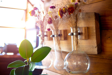 Plants in a glass flask hanging on the wall
