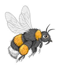 Fantasy illustration of cute insect bumblebee on white background. Hand-drawn vector image.