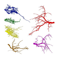 Realistic set of tree branches silhouette  (Vector illustration).Different color shades