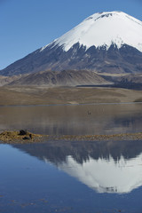 Aluminium Prints Reflection Snow capped Parinacota Volcano, 6,324m high, reflected in Lake Chungara on the Altiplano of northern Chile.