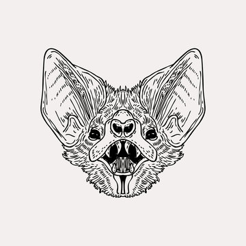 Vector vintage hand drawn bat head. Scarry illustration made with ink.