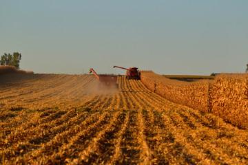 2018 Midwest Harvest 0013