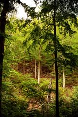 Green fresh nature forest in autumn light. Ilsetal in Ilsenburg, National Park Harz in Germany