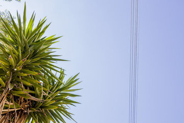 Palm tree, power cable and blue sky