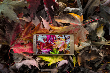sell phone in autumn leaves