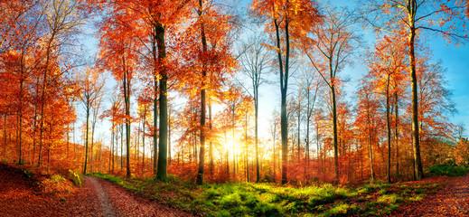 Wall Mural - Herbstlandschaft Panorama bei Sonnenuntergang