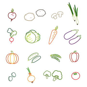 Set of vegetable icons. Beetroot, potato, mushrooms, spring onions, radish, cabbage, carrot, eggplant, pumpkin, cucumber, peas, bell pepper, olives, onion, broccoli and tomato. Vector Illustration