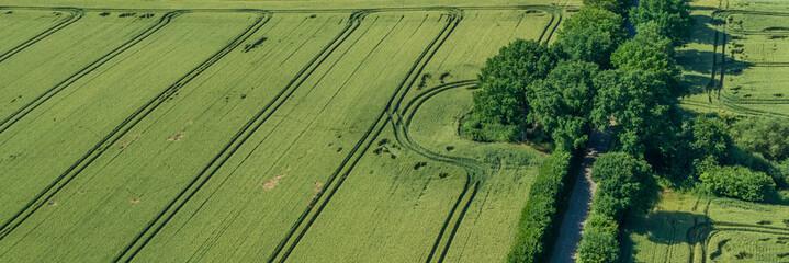 Getreidefeld mit Büschen und Straße Drohnenfoto
