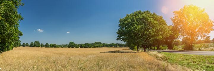 Getreidefeld reif im Sonnenschein Straße