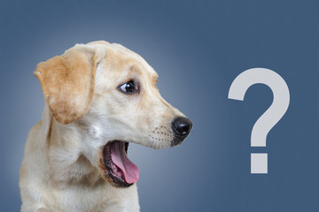 Surprised dog, question mark, on a blue background