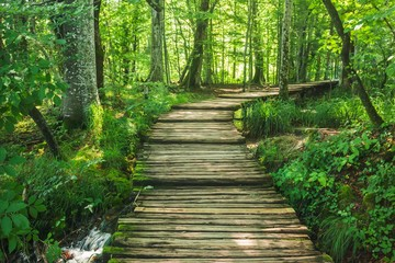Forest road in Plitvice National Park