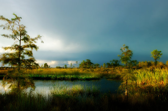 Beautiful side lighting through afternoon storm clouds lights up marshes and cypress along a pond in Big Cypress Preserve, Florida.