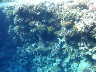 fotos from the red sea