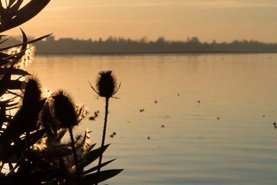 Black Silhouette of Typical Lake Vegetation against a Winter Sunset in the City of Mantua, Italy