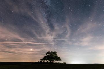Ein einsamer Baum und die Milchstraße mit Sternenhimmel