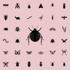 beetle icon. insect icons universal set for web and mobile