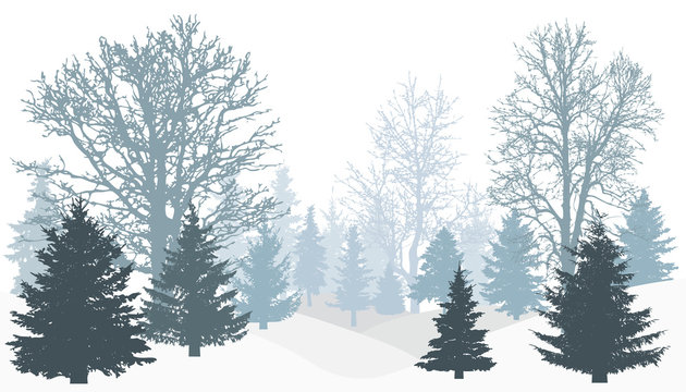 Silhouette of winter snowy forest (tree without leaves, christmas trees (firs)). Vector