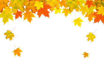 Bright autumn leaves on a white background