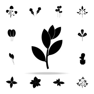 bay laurel tree icon. Plants icons universal set for web and mobile