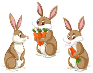 A set of rabbit and carrot
