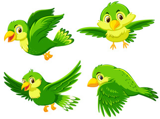 Green bird with different action