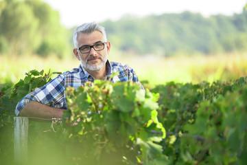 Winemaker standing in vineyard Wall mural