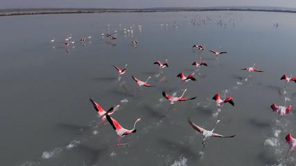 Beautiful flamingos birds in lake water. Spain