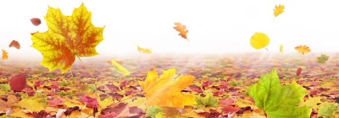 Herbst 187