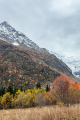 Bright yellow and red autumn in the mountains. Kavkaz. Dombay.