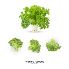 FRILLICE ICEBERG leaf salad isolated on white background.
