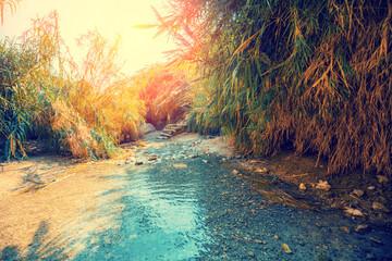 Oasis in the desert. Nahal David river. Ein Gedi reserve, Israel