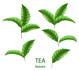 Set of realistic green tea leaves isolated. Green tea for your design, advertising and packaging. Vector floral elements.