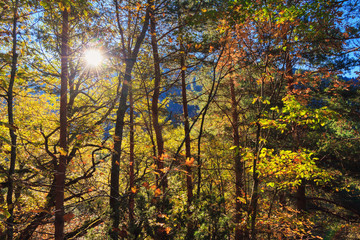 Beautiful landscape view of the autumn colors in the forest of the Rila Nature Park mountains in October in Bulgaria