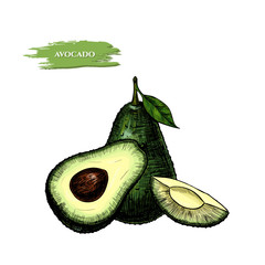 Vector background with avocado . Hand drawn. Vintage style