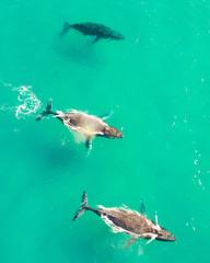 Wall Murals Green coral Humpback Whales