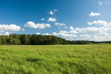Big green meadow and forest