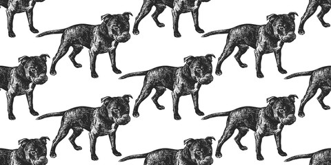 Seamless pattern with cute puppies of Staffordshire Bull Terrier.