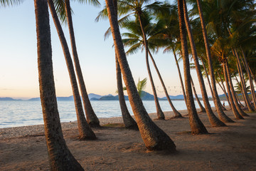 Palm trees at sunrise on a beach in Queensland, Australia