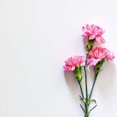 Real photo of a white background copy space with a bouquet of pink carnation flowers