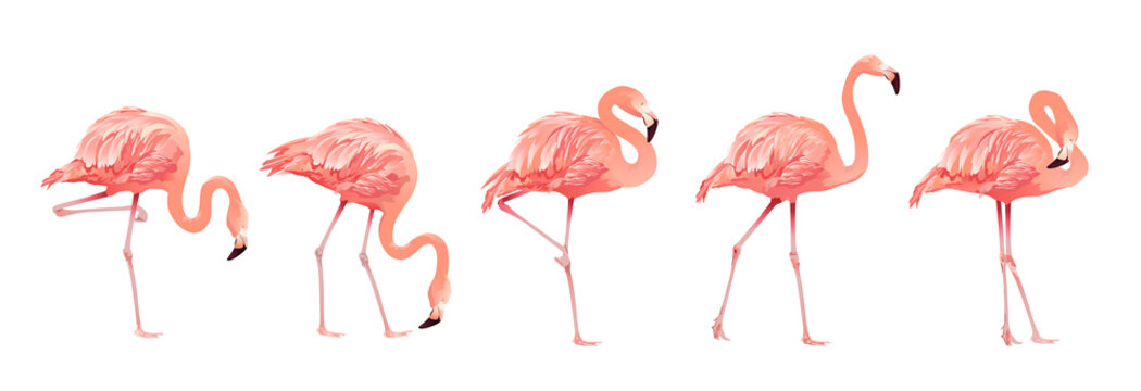 Pink Flamingo Bird Set Tropical Wild Beautiful Exotic Symbol Flat Design Style Isolated on White Background. Vector illustration