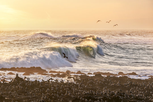 Black seagulls and waves of Pacific ocean on a beach of Arica, Chile