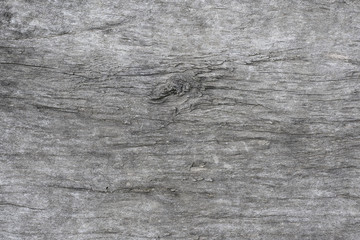 Gray texture of an old tree close-up