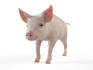 3d rendered illustration of a pig on white