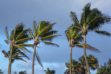 palm trees over cloudy sky