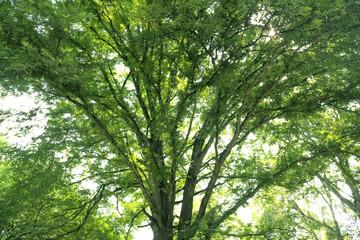 Green tree background